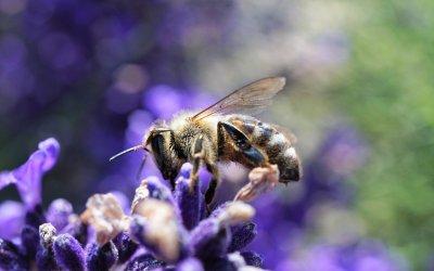 Interdire l'IEF, c'est essayer de tuer un peu plus la biodiversité et la régénération en cours