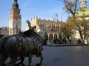 Mit Kutschen kann man in Krakau die Stadt erkunden.