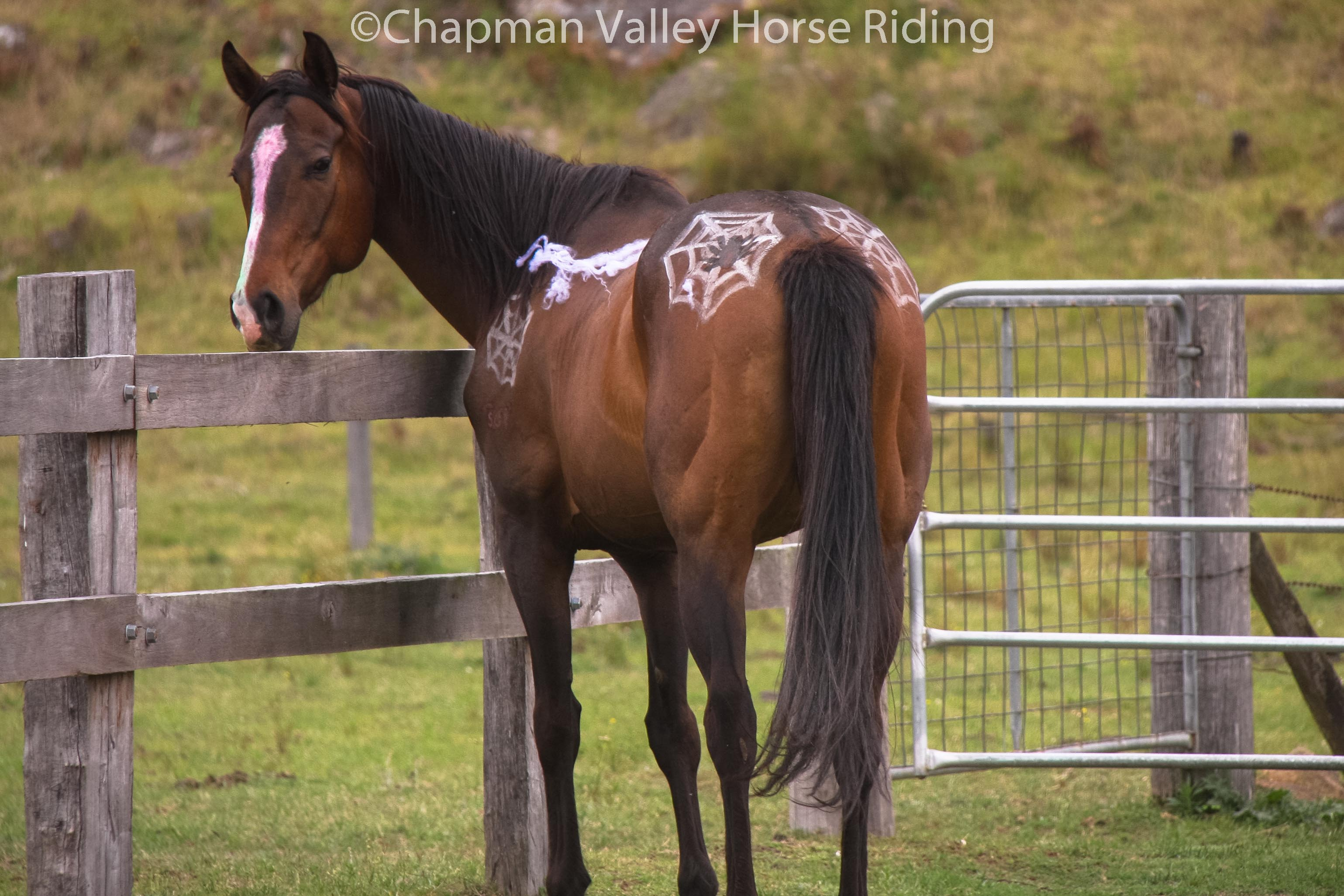 Horses At Chapman Valley Celebrate Halloween Chapman