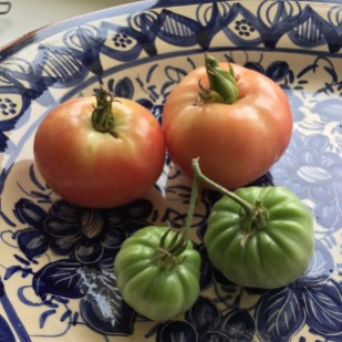 Chapter FIfty health kitchen garden organic home grown red and green tomatoes