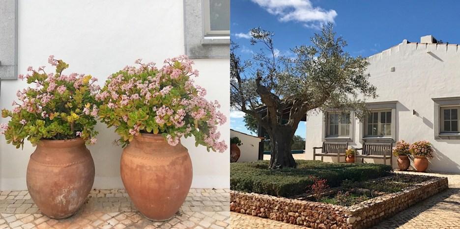 Algarve quinta jade plant