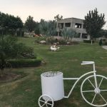 IMG 2595 - Bahria Town Rose Garden: A Sight to Behold