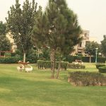 IMG 2621 - Bahria Town Rose Garden: A Sight to Behold