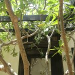 3 2 - Koel Cafe and Gallery: Food Elevated to Art