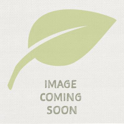 Non Invasive Bamboo Plants Uk