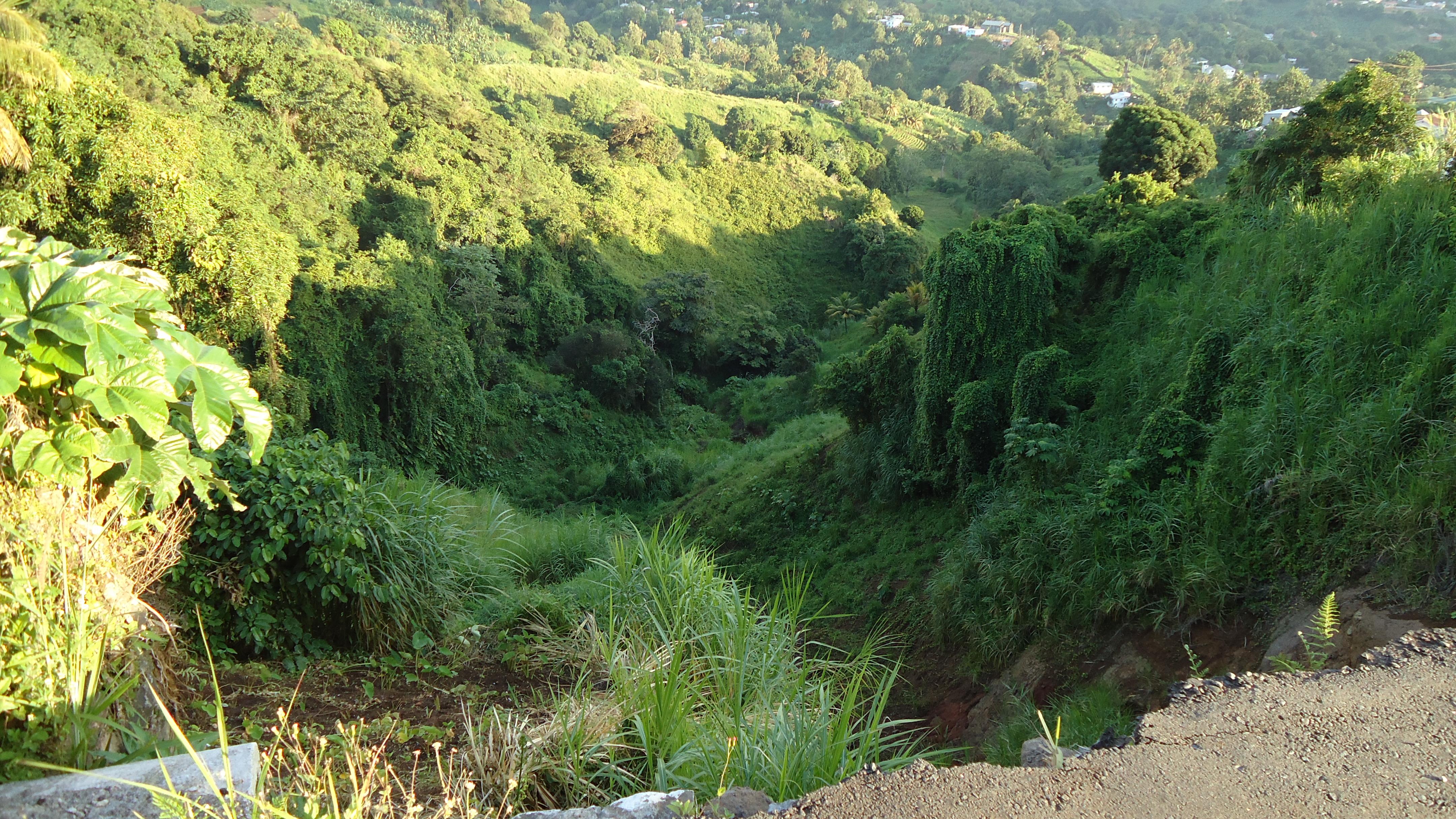 Image result for vegetation for landslide risk