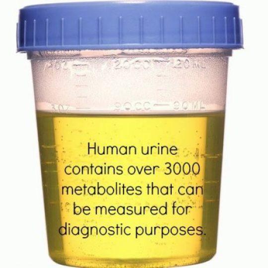 Human Urine