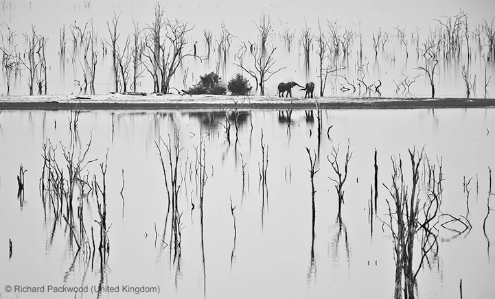 Winners of the Wildlife Photographer of the Year 2013-013