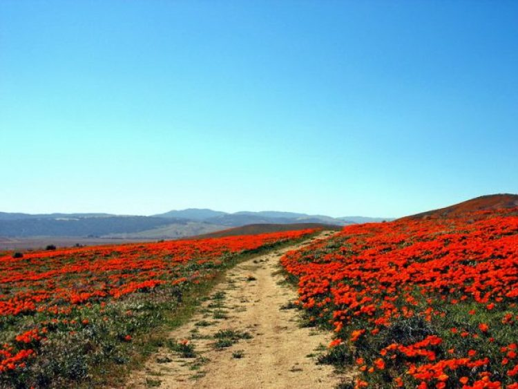 Antelope Valley Poppy Reserve in California13_exposure_resize