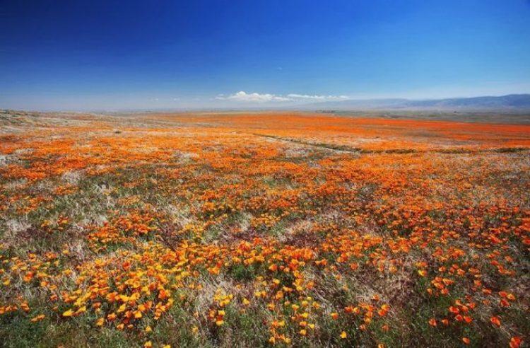 Antelope Valley Poppy Reserve in California2_exposure_resize