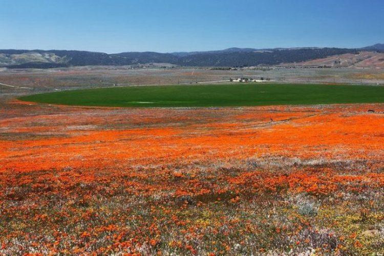 Antelope Valley Poppy Reserve in California3_exposure_resize