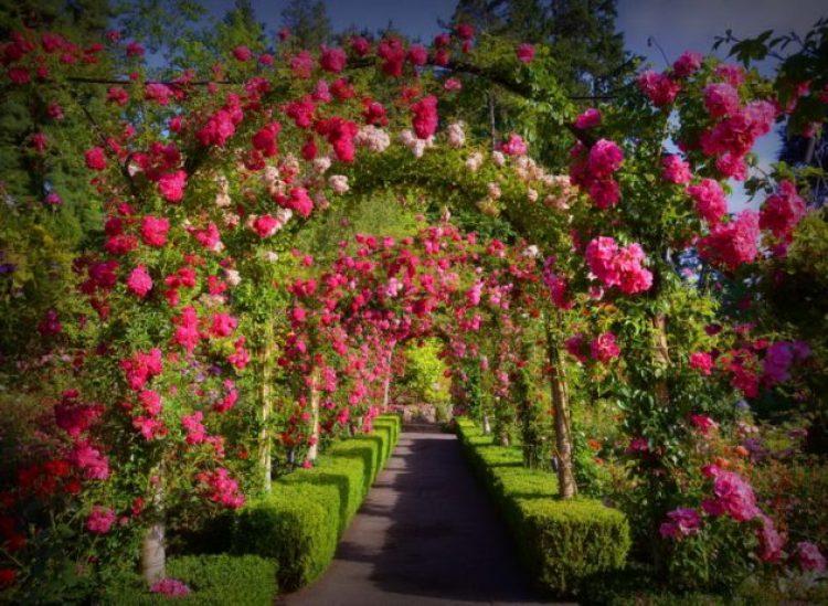 Butchart Garden Canada 66_resize