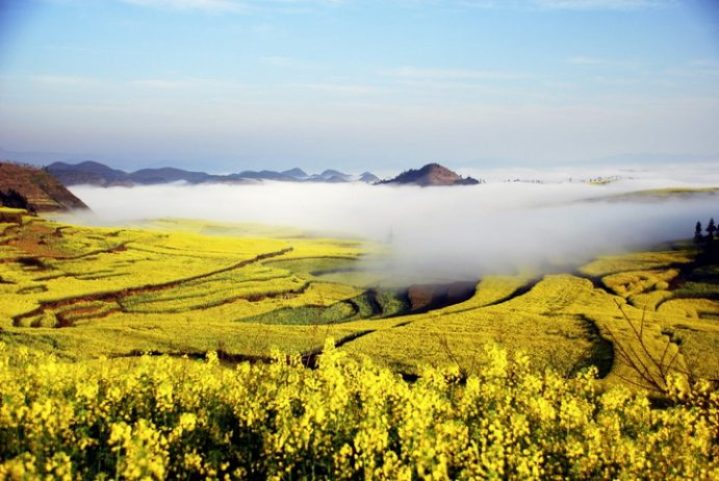 Ocean-of-flowers-Luoping-China-Clouds-1024x685_resize