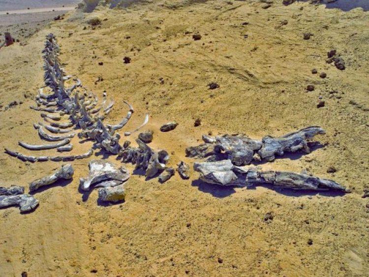 Wadi Al-Hitan (Whale Valley) Egypt1_resize