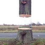 Puzzling Optical Illusion of a Hovering Tree Cut in Half