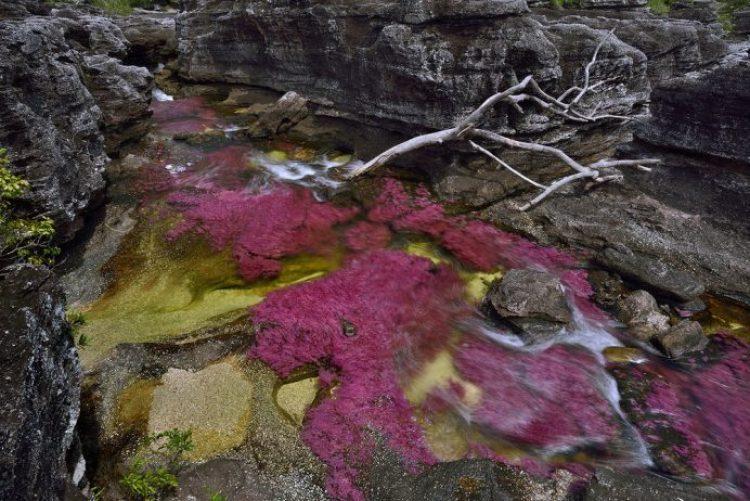 Cano Cristales a small river25