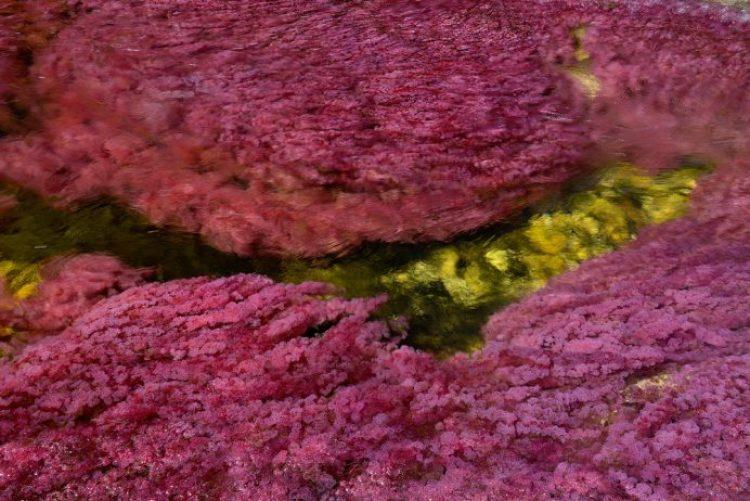 Cano Cristales a small river4