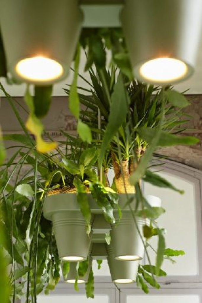 Unique Space-Saving Light Design with Potted Plants6