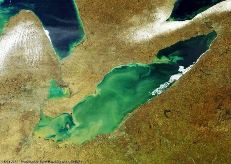 Toxic Algae Bloom on Lake Erie8