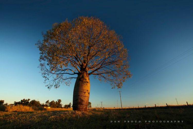 roma-bottletree
