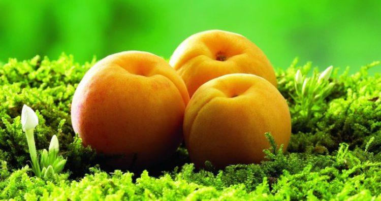Apricot5