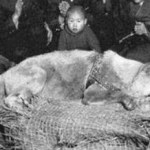 The Devotion and Loyalty of Hachiko Dog