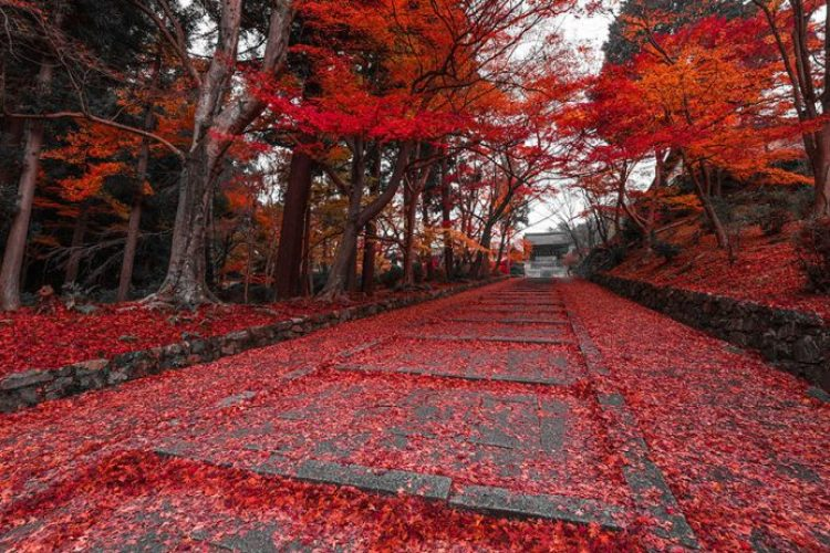 Autumn Path In Kyoto, Japan