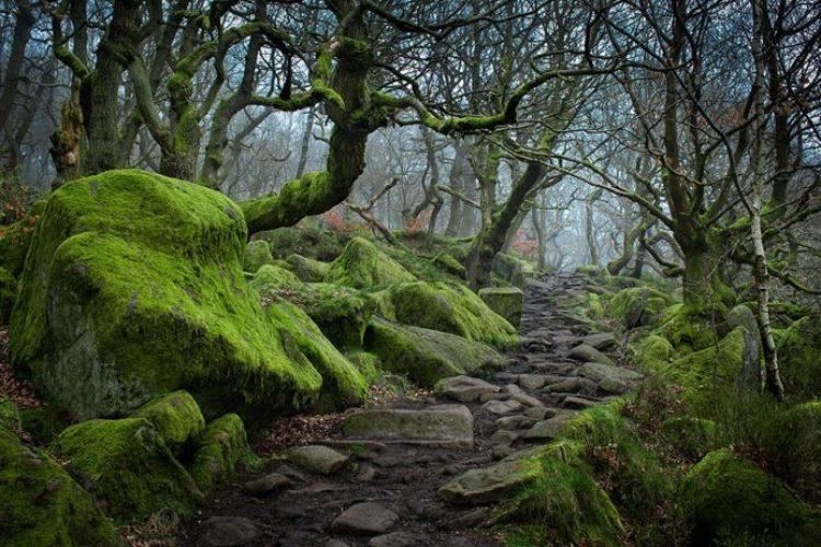 Padley Gorge, Peak District, UK