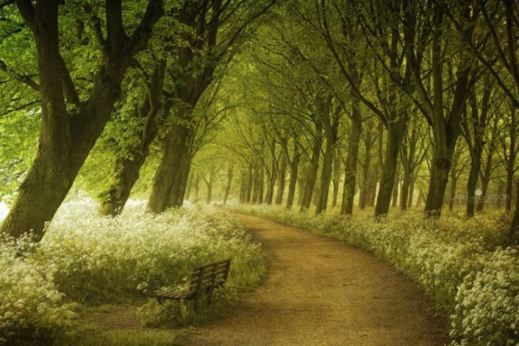 Springtime Path In Holland