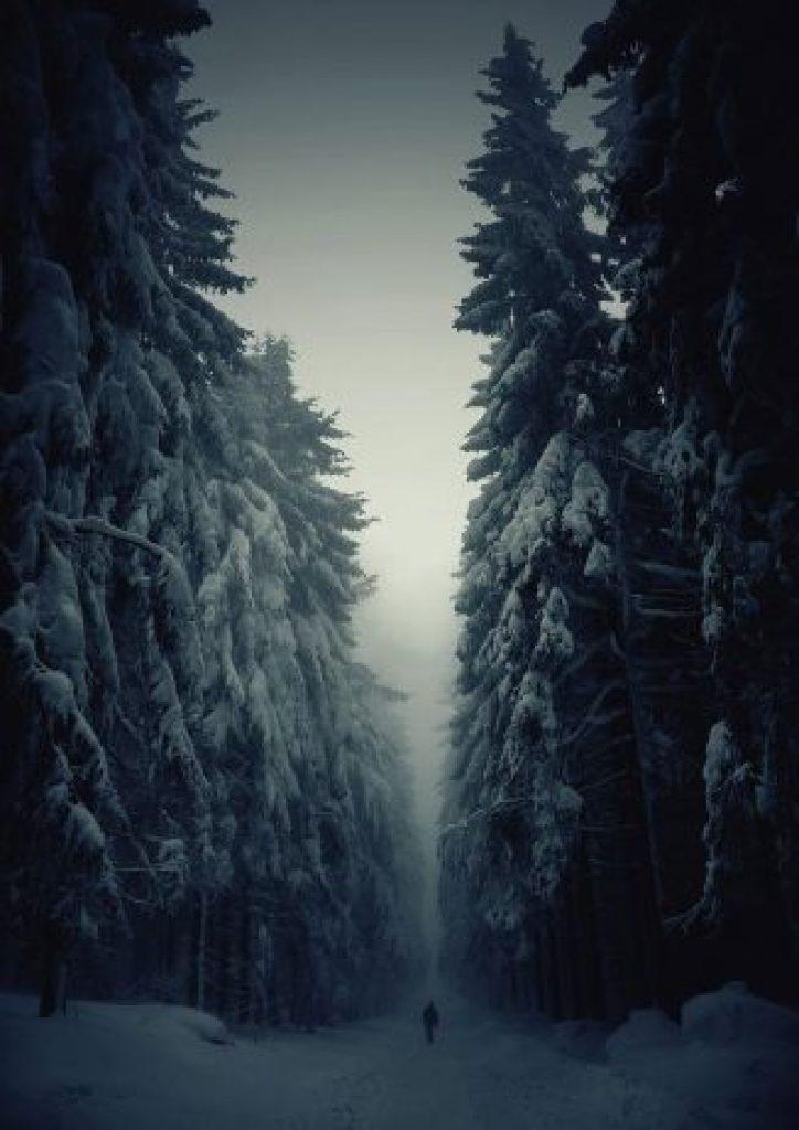Winter Forest Path, Czech Republic
