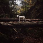 Wild Adventure of a Man and his Dog in Breathtaking Nature Photographs