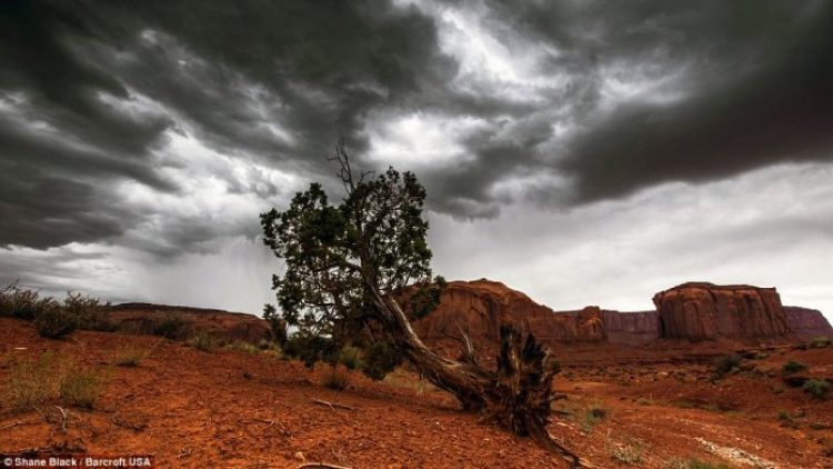 An upturned tree against a stormy sky in Arizona taken in 2013