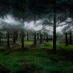 Artist Spent 7 Years in Turning UK Forests into Attractive and Ghostly Works of Art
