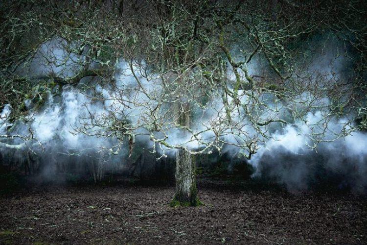 surreal-forest-photograhy-ellie-davis-16__880