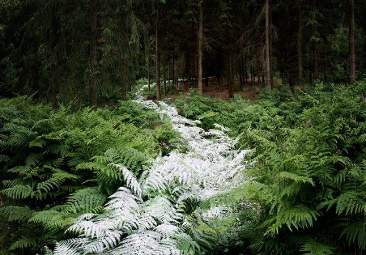 surreal-forest-photograhy-ellie-davis-23