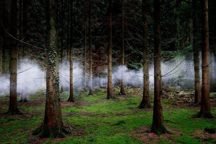 surreal-forest-photograhy-ellie-davis-2__880