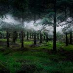 Mystical Photographs of Illuminated Forests in the United Kingdom by Ellie Davies