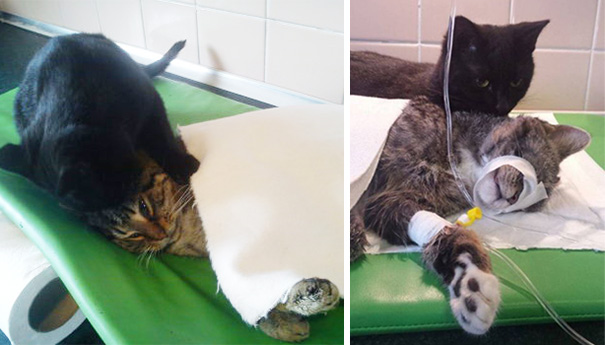 But when the vets heard him purr, they decided to save him