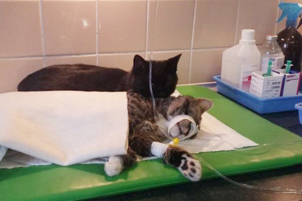 He's helping so sick cat, the people who brought him thought he would have to be put down