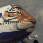 Magnificent Amur Tiger Face Printed to Nose of Aircraft to Highlights Animal's in Endangered Status