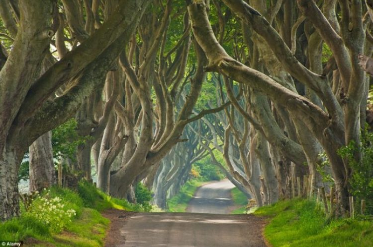 Along the way drivers can stop off at Antrim and see the regularly photographed natural phenomena, the Dark Hedges, which were used in Game of Thrones