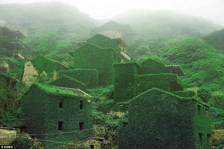 Vines climb the old stone walls, weave through the windows and doors and creep along the crumpling paths in an abandoned Chinese fishing village which has been reclaimed by mother nature on Shengshan Island