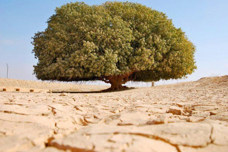 arbol-sahabi-jordania
