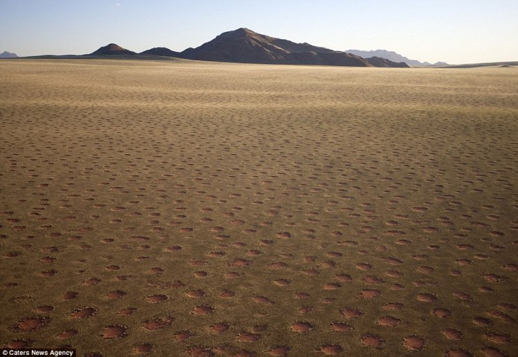 The mysterious fairy rings that stretch across the grassy plains of the Namib desert in Namibia have generated many theories for what lies behind the patches of bare earth.