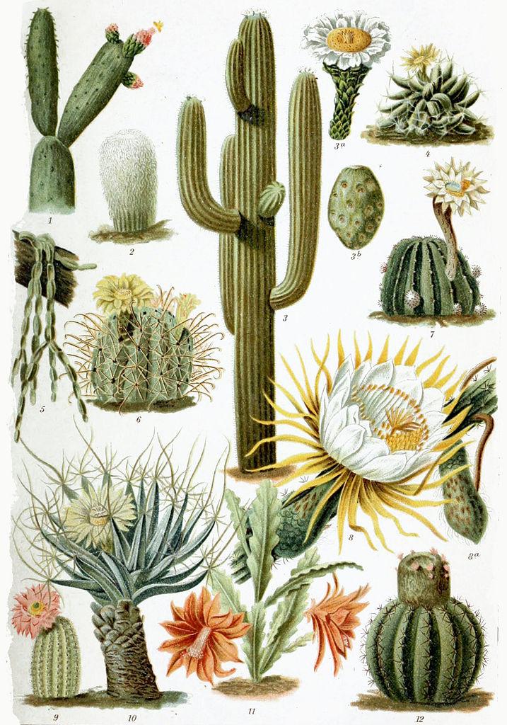 Various_Cactaceae