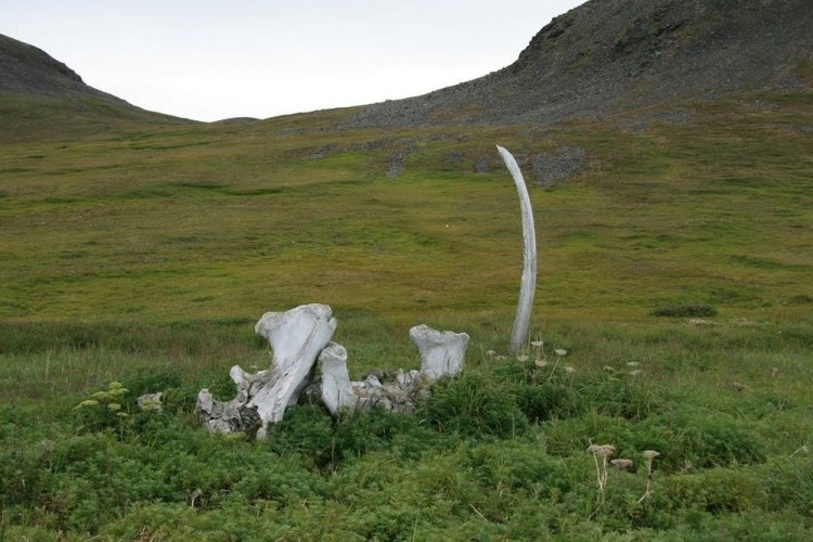 "Along the northern shore of the remote Siberian island of Yttygran, in the Bering Sea, is an area recognized as the ""Whale Bone Alley"