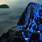 The Blue Rivers of Bioluminescent Shrimp