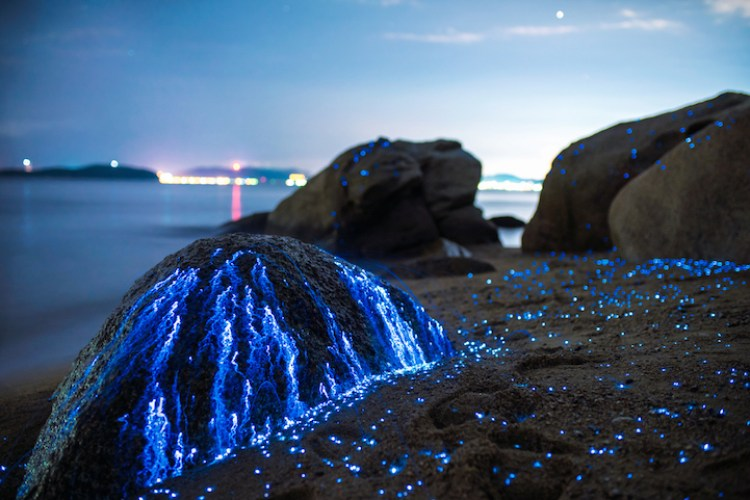 This fall, Tdub photo hopes to capture more bioluminescent pictures by focusing on glowing mushrooms.