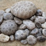 The Petoskey Stones