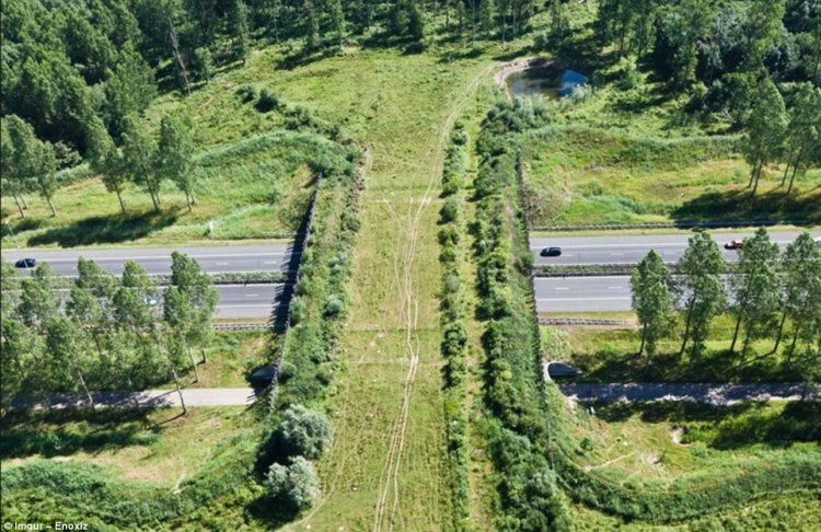 The Netherlands is home to a great number of ecoducts including this one, which help reduce the number of deer and boars being struck by vehicles